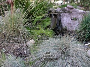All grasses with names-sm.jpg
