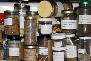 TPF-seed-fridge