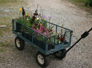 Cart of plants in the TPF Nursery Sales Yard
