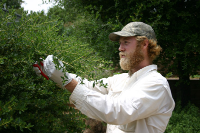 Native California plant propagation by Tim