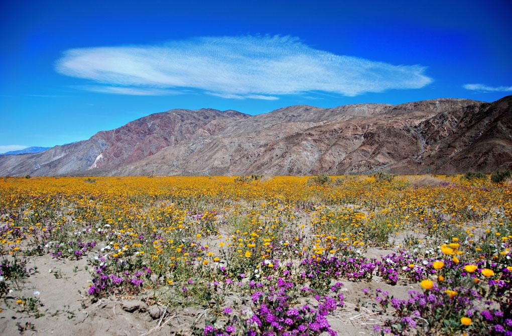 California's Native Plants